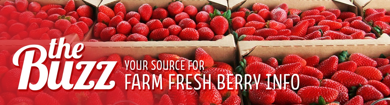 The Buzz: Your source for farm fresh berry info