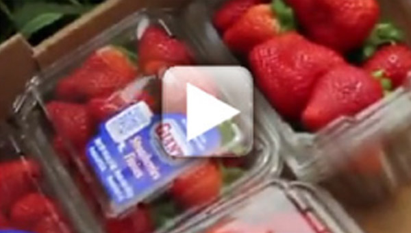 Strawberry Packing