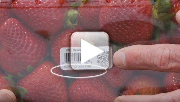 Track Your Berries Back to Jason Morgan's Farm